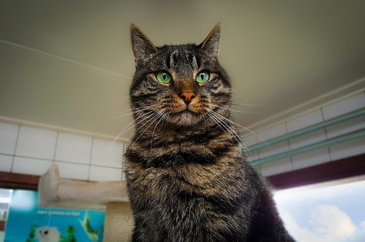 Cat, Shelter, Amsterdam, Eyes, Green, Handsome, Pretty