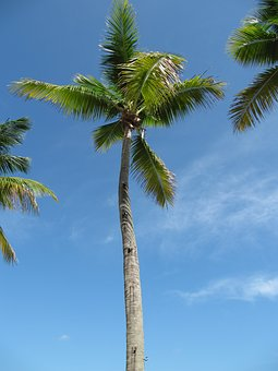 Palm Trees, Caribbean, Holiday, Dominican Republic