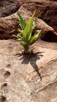 Survive, Rocks, Plant, Outdoor, Nature