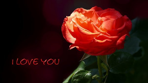 Rose, Red, Love, I Love You, Rose Card, Map