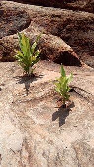 Survive, Rocks, Plant