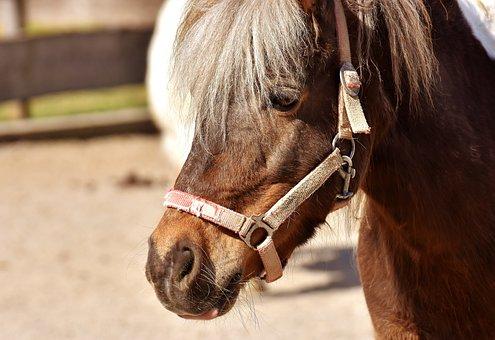 Pony, Horse, Brown, Cute, Animal, Nature, Seahorses
