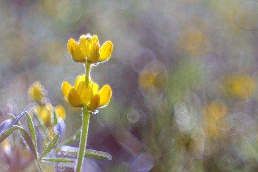 Flower, Yellow, Meadow, Colors, Rosa, Bokeh, Blur