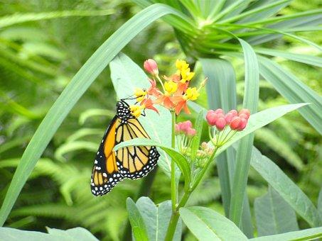 Butterfly, Butterfly Garden, Bl, Wings