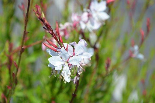 Flowers, White, Nature, Garden, Jardiniere, Petals