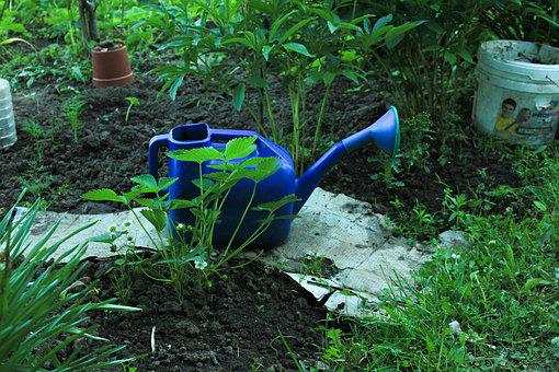Watering Can, Wild Strawberry, Grass, Garden, Nature