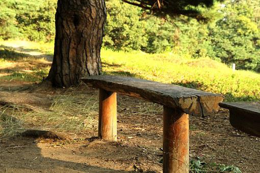 Forest, Bench, Park, Wood, Walk, A Wooden Bench