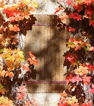 Window, Shutter, Autumn Leaves, Home, House