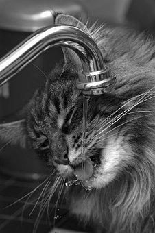 Cats, Pet, Cat, Animal, Cat Face, Feline, Animals
