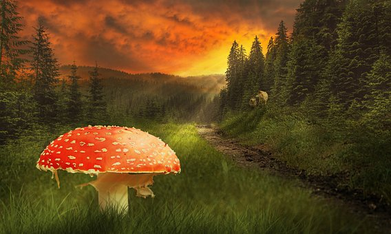 Fly Agaric, Mushroom, Forest, Forest Path, Nature