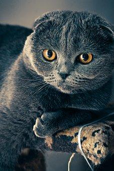 Cat, Fold, View, Grey Fur