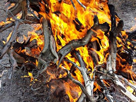 Fire, Wood, Burn Combustion, Hot, Firewood, Fuel