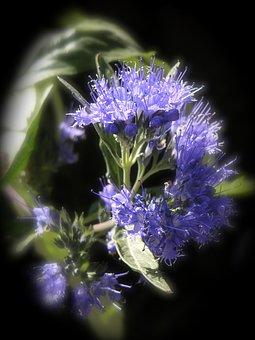 Hyssop, Ysopblüte, Spice, Herbs, Culinary Herbs, Herb