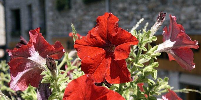 Flowers, Red, Nature, Garden, Warmth, Bouquet