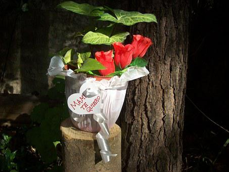 Flowerpot, Gift, Mother's Day, Roses, Red, Trunk