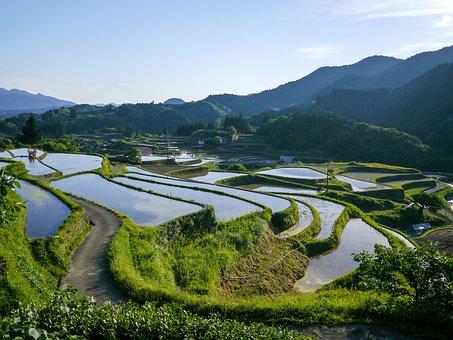 Japan, Rice Terraces, Kumamoto, Green, Rice