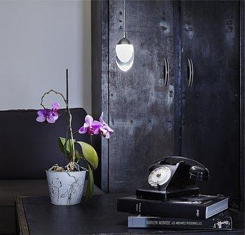 Lamp, Phone, Flower, Orhid, Still Live, Interior, Style