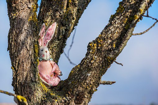 Rabbit, Animals, Pet, The Children, Toys, Teddy, Sky