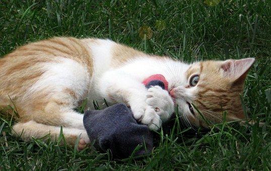 Cat, Tomcat, Kitten, Socks, Play