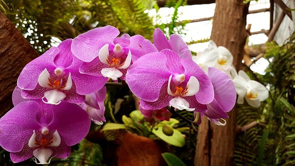 Orchids, Flower, Plant, Nature Park, Jungle Park