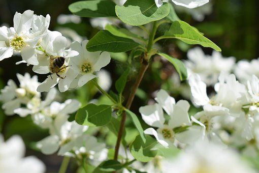 Bee, Flower, Bud, Petal, Wood, Foliage, Nature