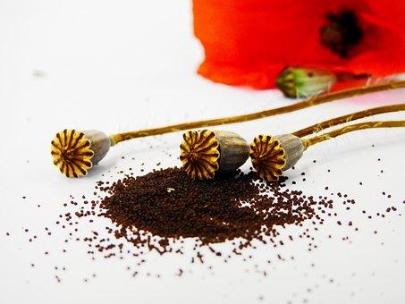 Poppy, Poppy Capsule, Flower, Blossom, Bloom, Capsule