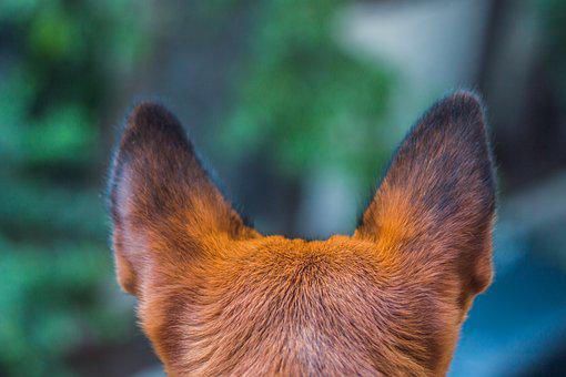 Dog, Paw, Animal, Pet, Puppy, Cute, Canine, Dog Paw