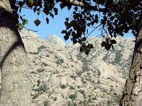 Stone, Stone Mountain, Pedriza, Mountain, Tree