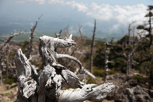 Halla, Mountain, Wood, And Thu, High Items, Jeju