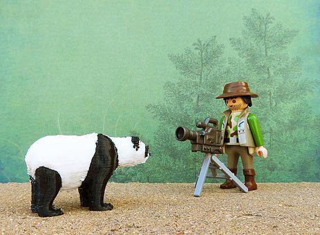 Photographer, Nature, Bear, Animal, Photography