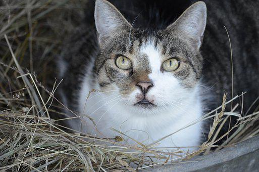 Summer, Bed, Straw Bed, Cat, Nature, Animals