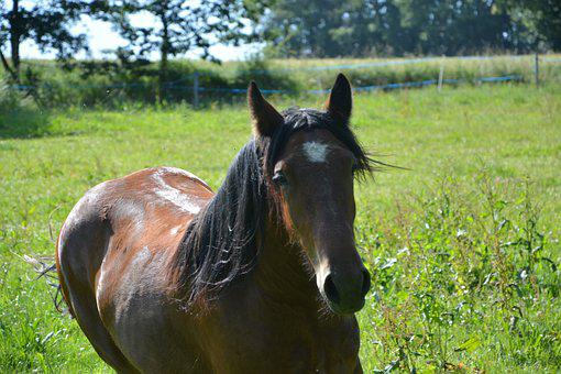 Horse, Standard, Horseback Riding, Dressage, Animals