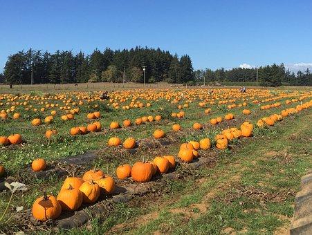 Pumpkin, Farm, Harvest, Halloween, Food, Vegetable