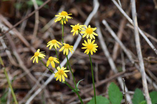 Flora, Flower, Blossom, Yellow Flower, Yellow Blossom