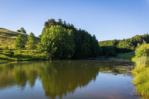 Pond, Field, Water, Forest, Nature, Landscape