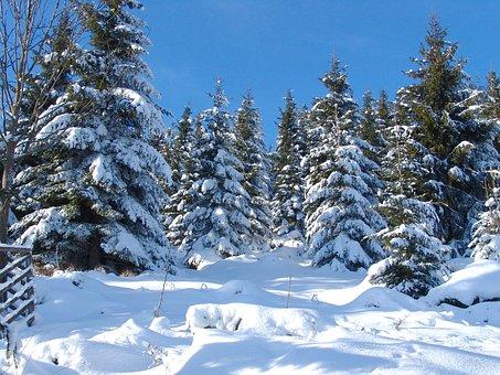 Gosslar, Winter, Forest, Nature, Tree, Winter Trees
