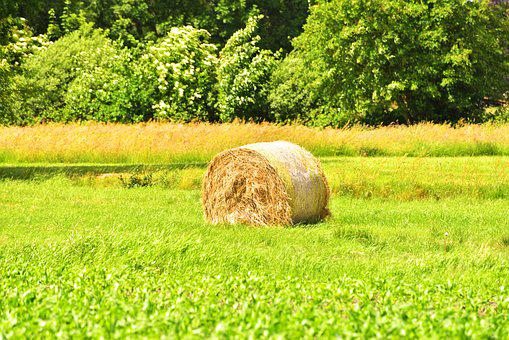 Hay, Round Bales, Agriculture, Field, Harvest