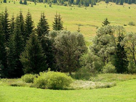 Bush, Forest, Meadow, Green, Nature, Hill, Landscape