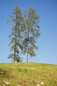 Trees, Sky, Landscape, Blue Sky, Nature, Meadow, Hill