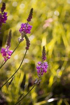Flowers, Pink, Nature, Wild Flowers, Wild Plant, Summer