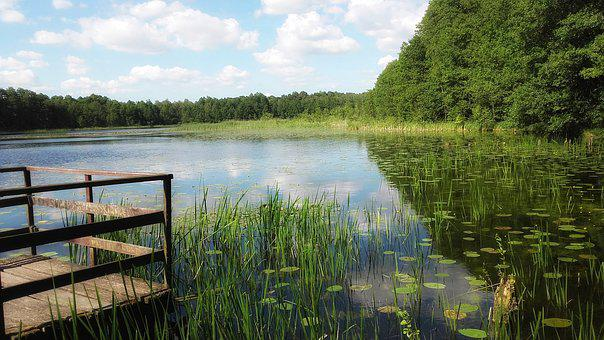 Lake, Water, Landscape, Nature, Pond, View, The Frog
