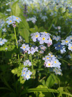 Flowers, Macro, Summer Flowers, Nature, Closeup