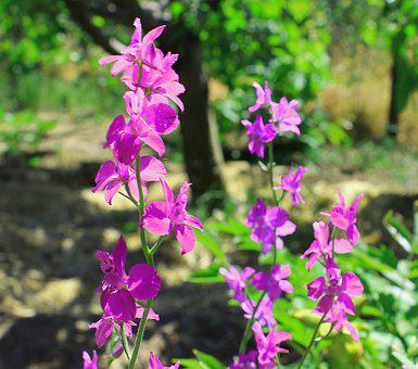Summer, Flowers, Summer Flowers, Purple, Dacha, Nature