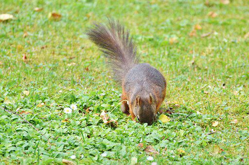 Squirrel, Nager, Rodent, Cute, Nature, Cheeky, Animal