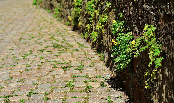 Patch, Cobblestones, Road, Wall, Stone Herb