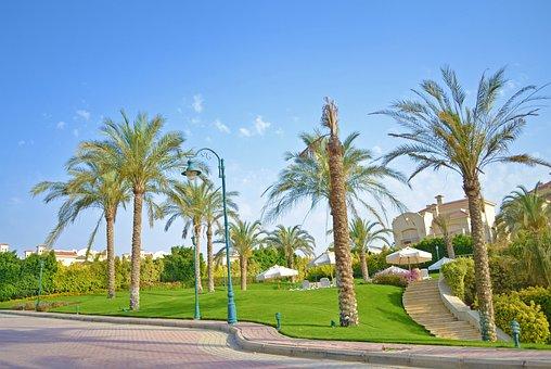 Cairo, Palm Tree, Landscape, Egypt, Africa, Arab, Sky