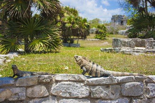 Reptile, Iguana, Lizard, Animal, Green, Animals, Nature