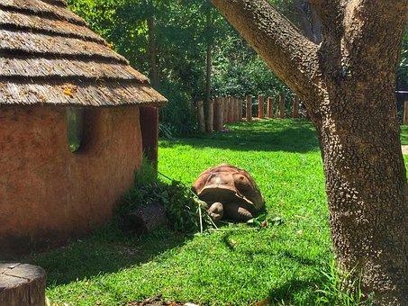 Tortoise, Turtle, Zoo, Animal, Nature, Wild, Wildlife