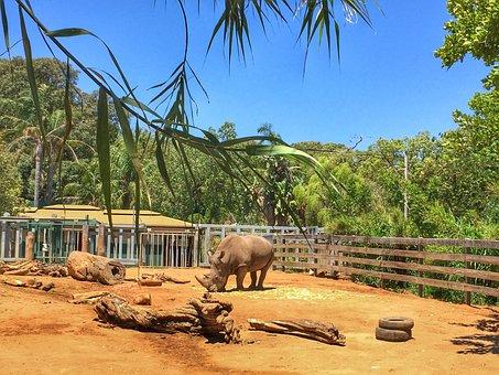 Rhinoceros, Zoo, Animal, Wildlife, Wild, Mammal
