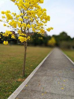 Wong Feng 鈴 Wood, Jinan University, Newnham